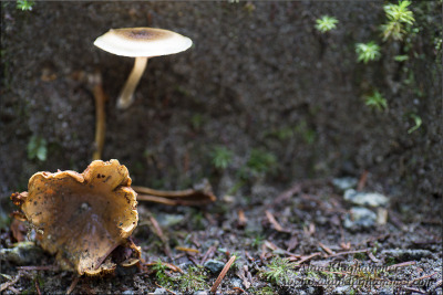 Close-up image of mushrooms. There is a fair bit of post processing to control the high dynamic range.